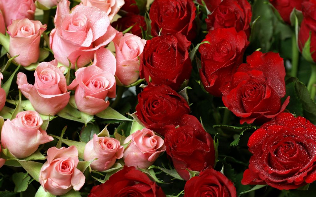 pink__red_roses_bouquet-wide