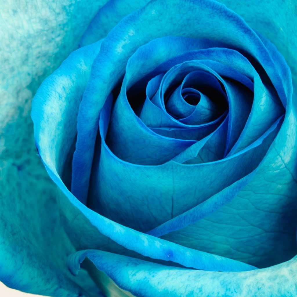 9e43fa25c Sky Blue